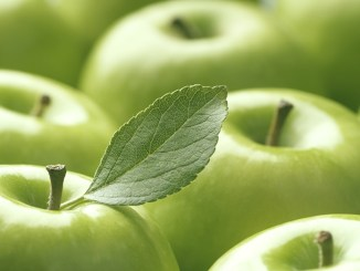 Close up of shiny Granny Smith apples