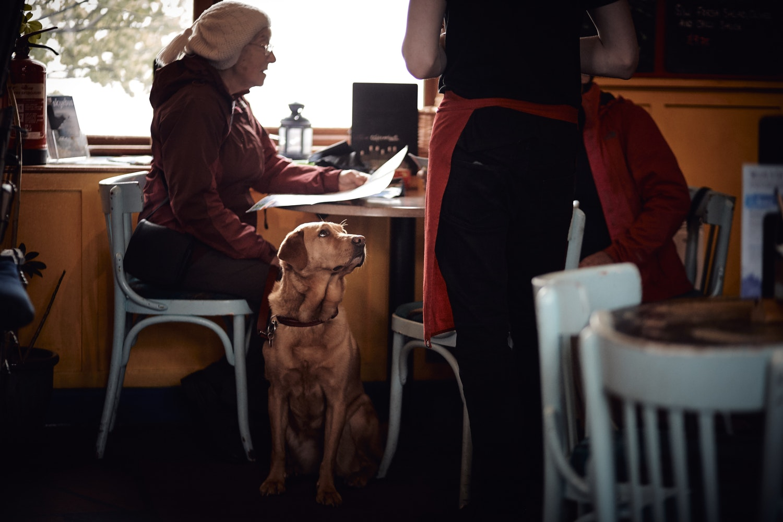 Restaurantes en la CDMX que ofrecen un menú canino (en donde tú también comerás delicioso)