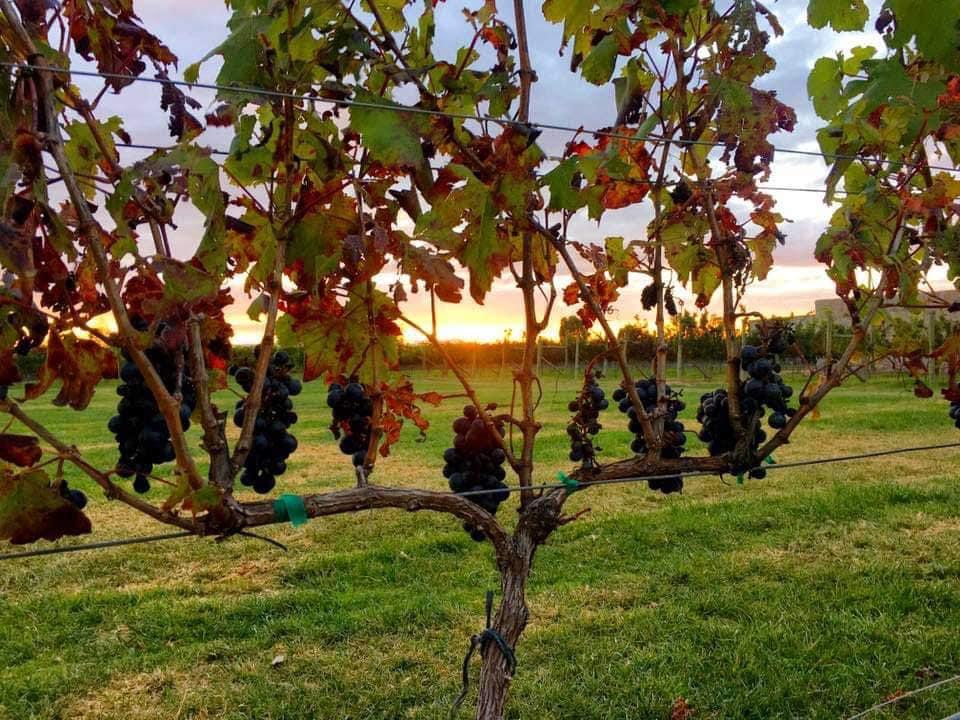 5 diferencias entre el vino del Viejo y el Nuevo Mundo  (conviértete en todo un conocedor)