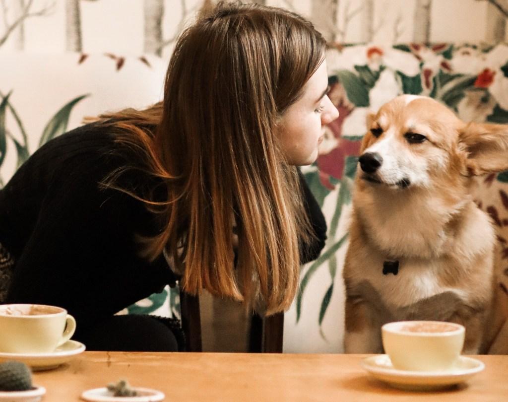 6 planes 'pet friendly' para consentir a tu perro en la CDMX
