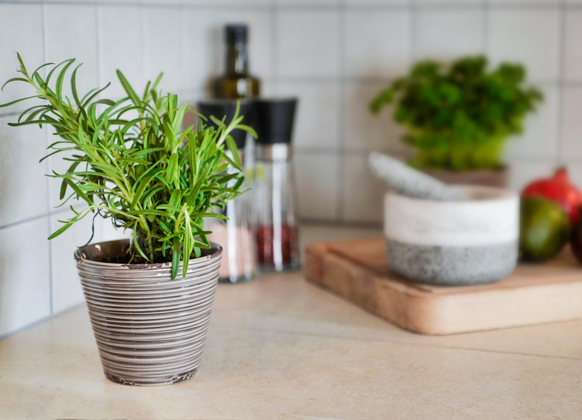 7 plantas medicinales que puedes cultivar en tu casa