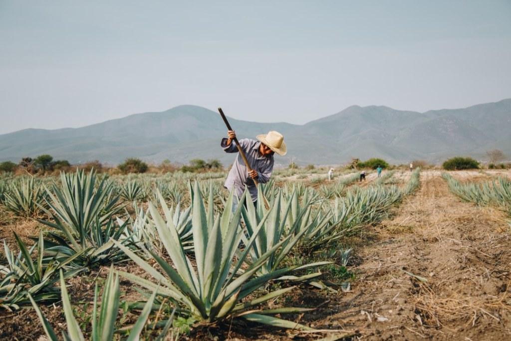 7 palenques mezcaleros en Oaxaca que puedes visitar para aprender sobre este destilado