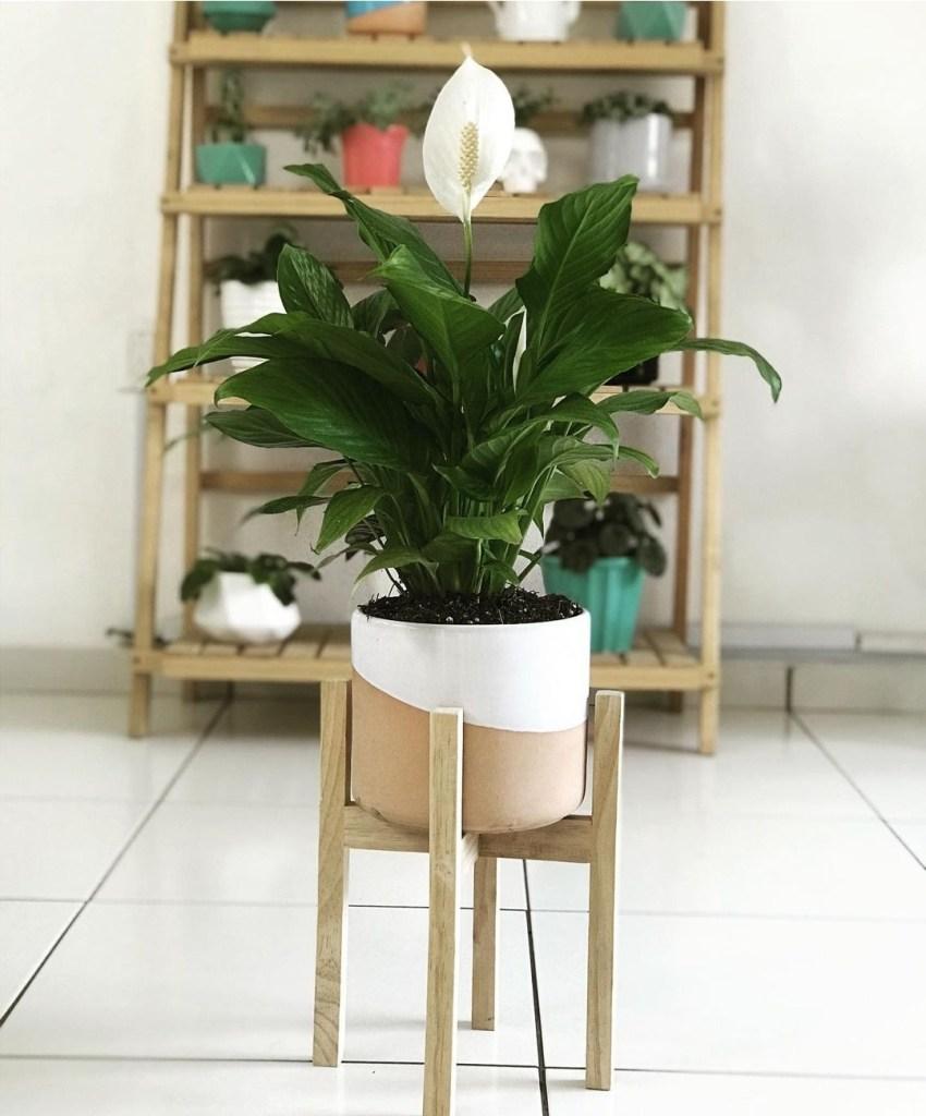 plantas-chidas