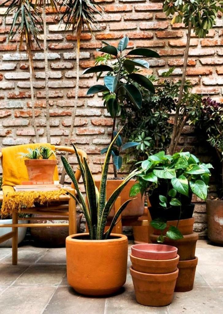 plantas-house-cdmx