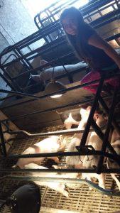Pig Farmers