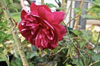 15-Stowe Garden