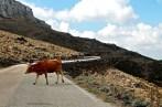 Sardinia - Monte Albo
