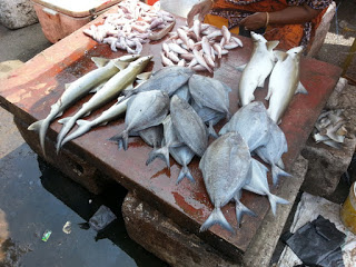 Chennai Fish Markets - Sunday morning outing!