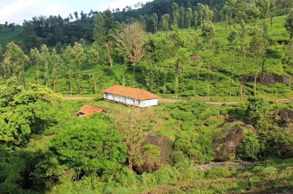 chembera peak wayanad