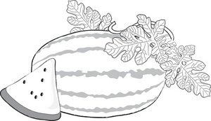 clipart watermelon outline drawing coloring slice whole clip foodclipart drawings