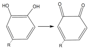 ppo enzymatic browning step 2 oxidation