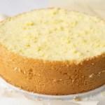 sponge cake sliced in half