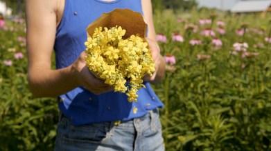 Muellin flower, sawmill herb farm, food. curated.