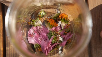 echinacea, sacred warrior, food curated