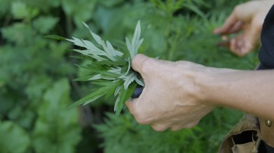 mugwort leaves, food curated