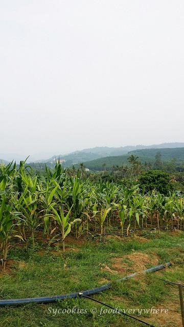 24.Titi Eco Farm Resort