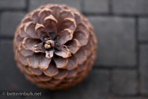 Pinecone - aperture f/2.0