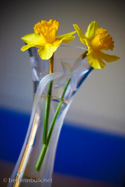 The Neighbor's Daffodils