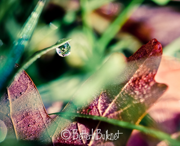 Rain drop on grass and leaf