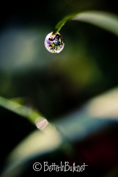 Rain drop on grass