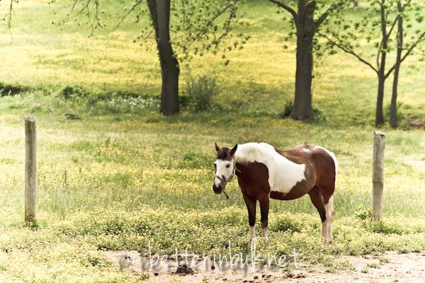 Maryland horse show