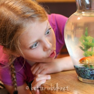 Pet-Sitting Marshmallow the Goldfish – Wordless Wednesday #Linky