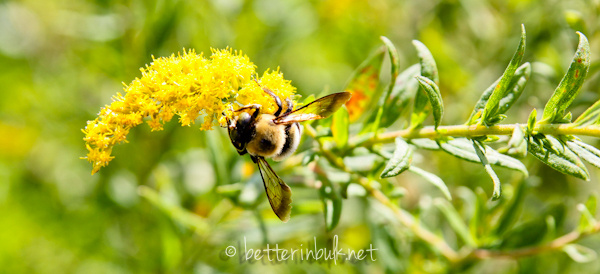 bee on flowers - nature photography