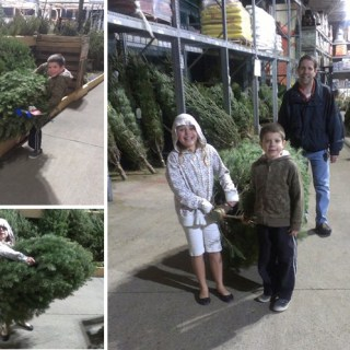 Christmas Tree 2012 – #PSF Give Me Your Best Shot