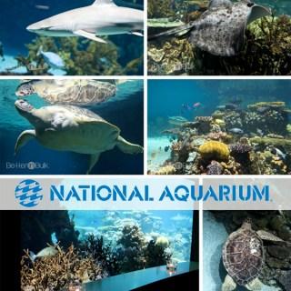 national aquarium in baltimore maryland