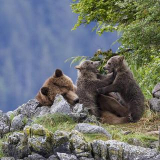 Disneynature BEARS Review – 10 Reasons to See #DisneynatureBears