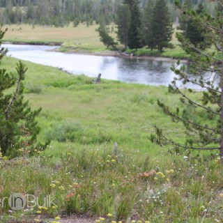 Yellowstone National Park #PSF