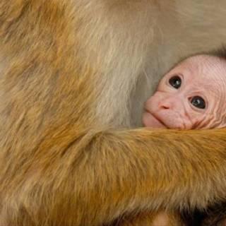 Disneynature Monkey Kingdom Movie Review #MonkeyKingdom