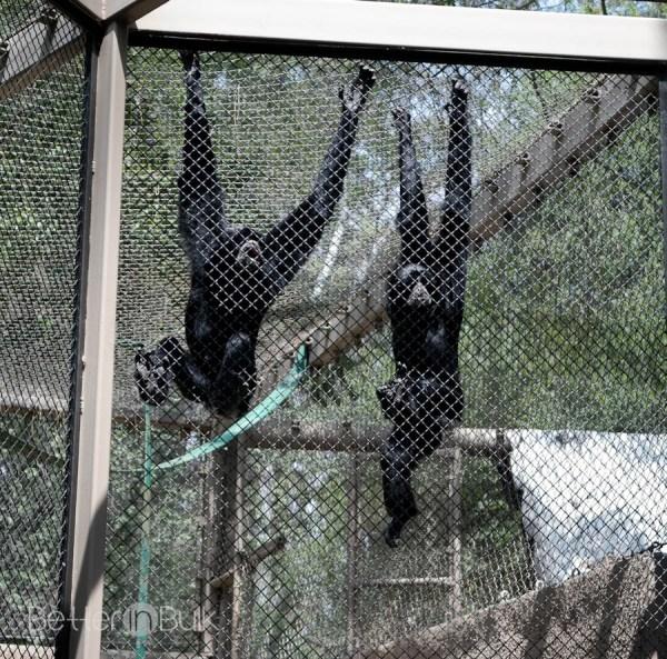 Los Angeles Zoo Monkey Kingdom