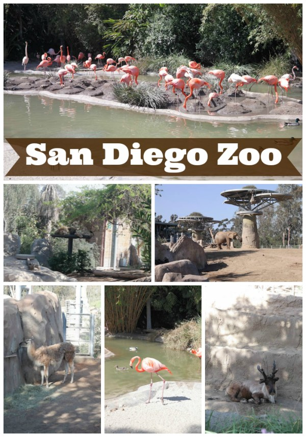 San Diego Zoo animals