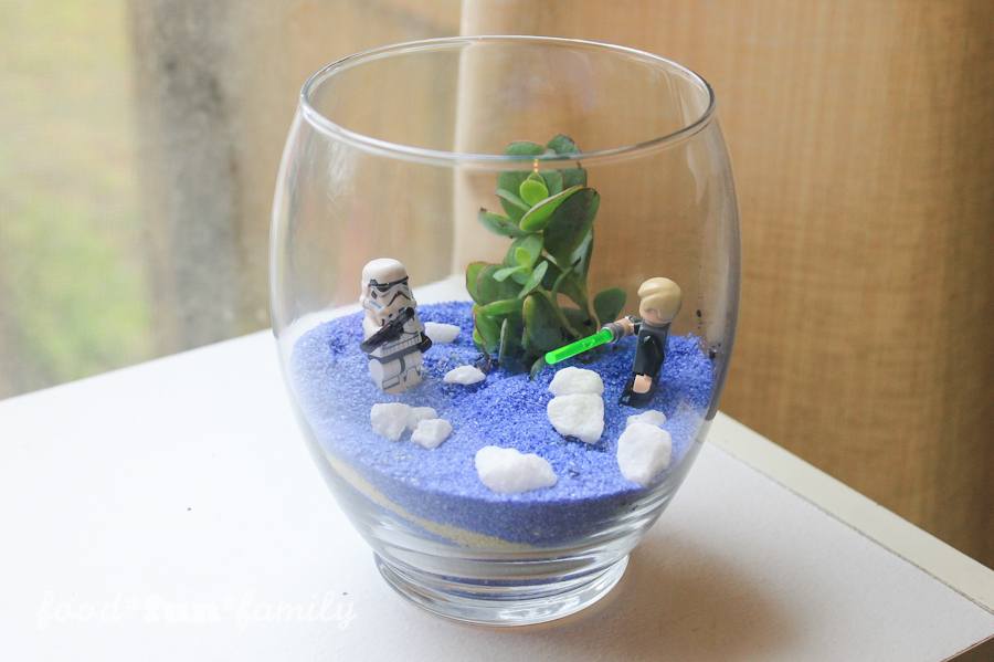 How to make a DIY Star Wars Terrarium Succulent Garden