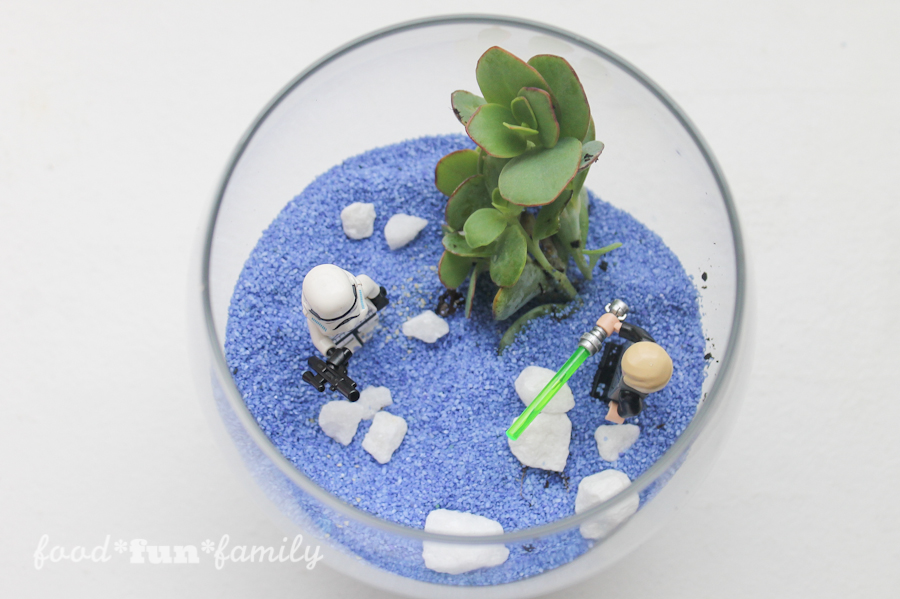 How to make a DIY Star Wars Terrarium Succulent Garden