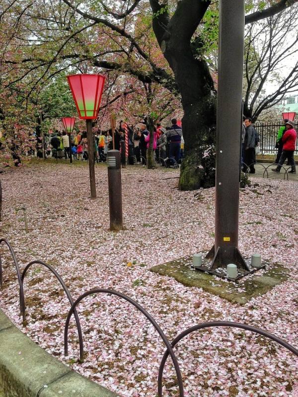 Foodicles Osaka Cherry Blossom 10