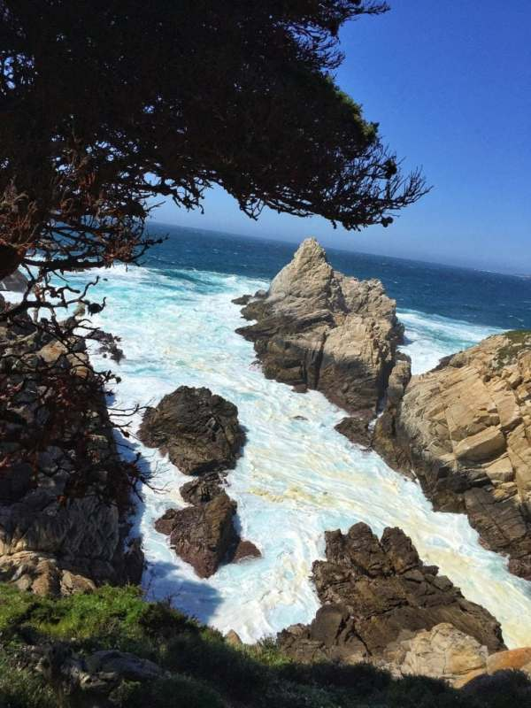 Foodicles Point Lobos 8