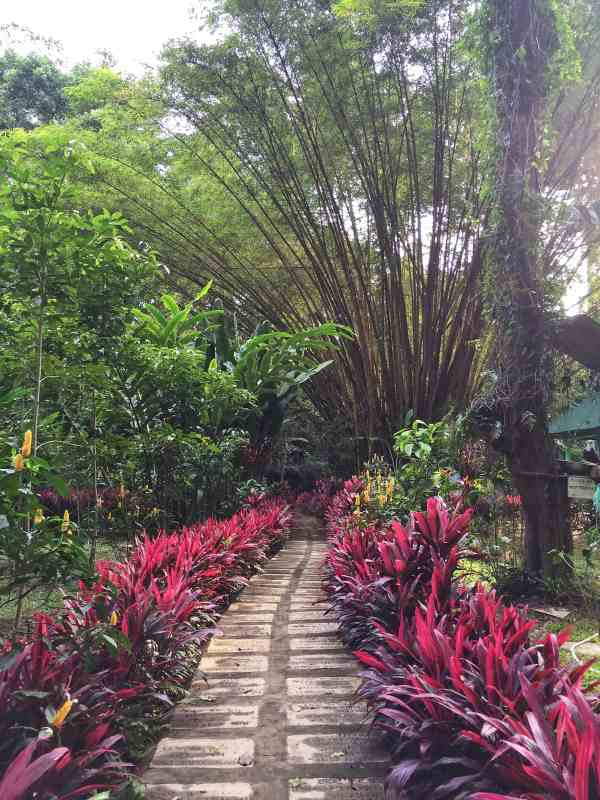 foodicles-davao-1-philippine-eagle-sanctuary