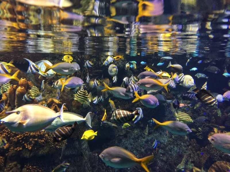 foodicles-osaka-3-aquarium