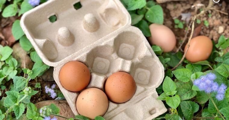 【鬈毛在苗栗。山板樵】撿雞蛋、畫臉譜、做蛋卷