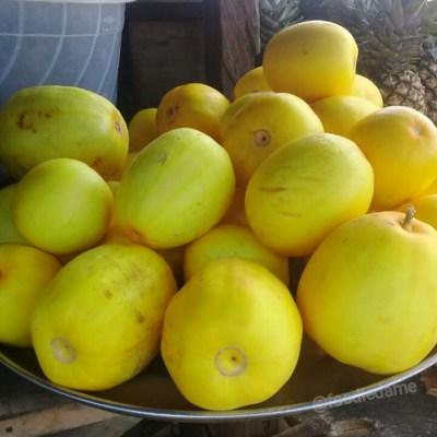 Golden melon