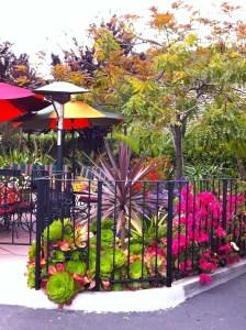 Casa de Bandini Restaurant Succulent plants