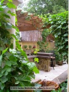 Kitchen garden with grape vine growing on shade structure foodie gardener