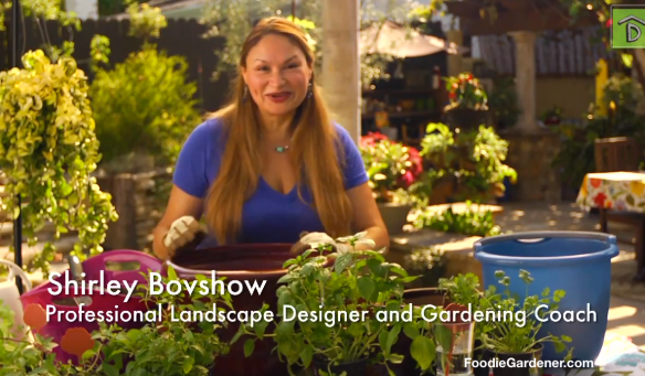 Shirley Bovshow, Foodie Gardener teaches how to grow popular cocktail herbs, mint, basil and cilantro on Way to Grow Show video