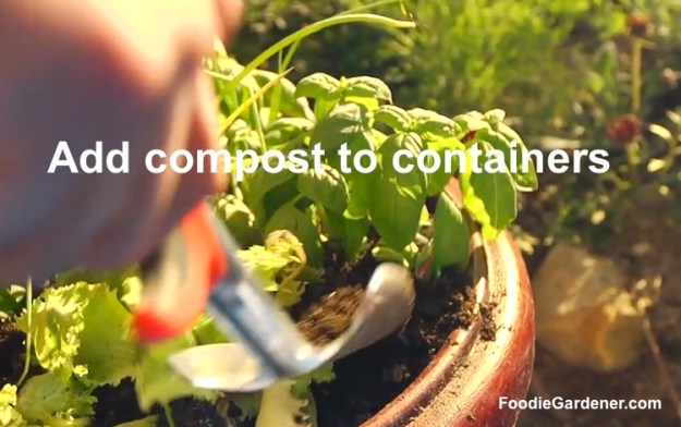 Add compost to edible container garden