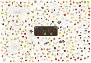 Varieties of fruit infographic foodie gardeners