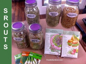 sprouted seeds, nuts and beans with seed packets