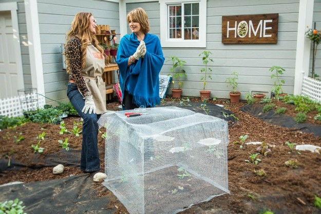 shirley bovshow and cristina ferrare build a critter control plant protector cage made from 1/4 inch garden mesh for vegetable garden on Home & Family show