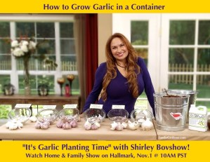 Shirley Bovshow demonstrates how to grow garlic in a container on the Home and Family show, on Hallmark Channel